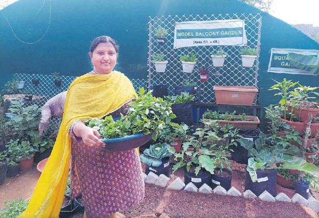49-meter garden yard for four people - Sakshi