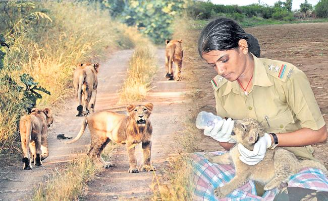 Special story to raseela - Sakshi