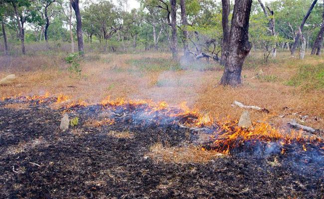 Fire Accidents in Nallamala Forest YSR Kadapa - Sakshi
