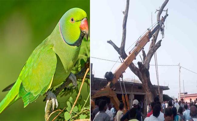 Man Climbs 40 Feet High Tree To Catch Parrot Breaks Wrist - Sakshi