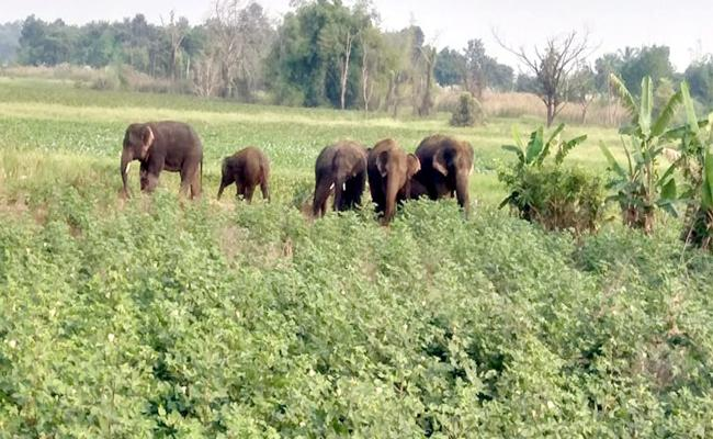 Elephants Attack on Vizianagaram Villages - Sakshi