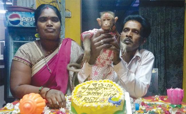 Hotel Owner Celebrate Monkey Birthday in Anantapur - Sakshi