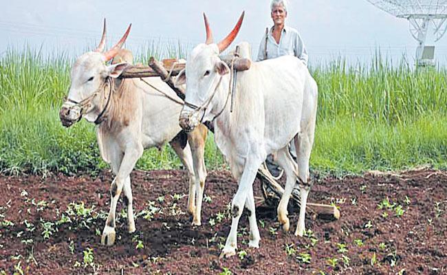 Telangana Government Decides To Rythu Samagra Survey - Sakshi
