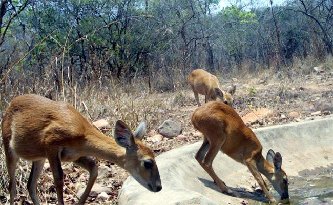 Wild Animals Suffering With Water Problems - Sakshi