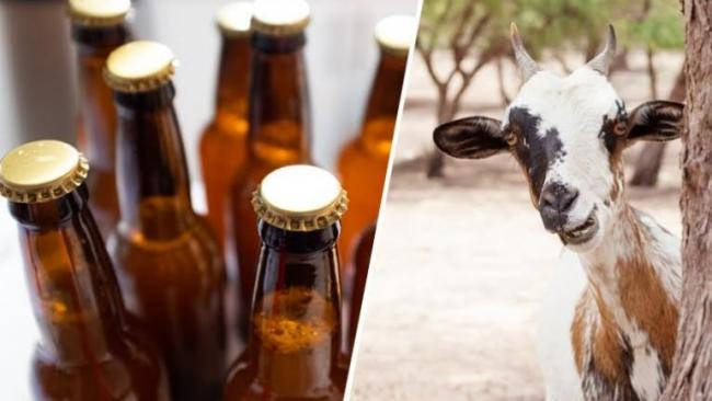 Alcohol At Half Rate Free Goat On Eid  Were Part Of SVP's Poll Promises - Sakshi