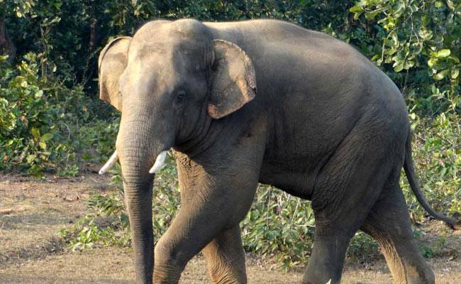 Five People Died In Elephant Crush In Odisha - Sakshi