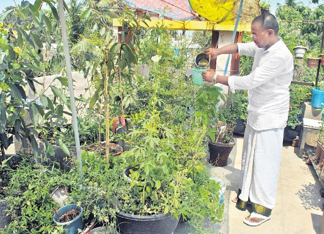 Green medicinal home terres - Sakshi
