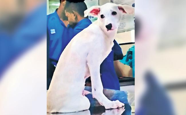 Complaint on Hospital While Pet Dog Died With Doctors Negligence - Sakshi