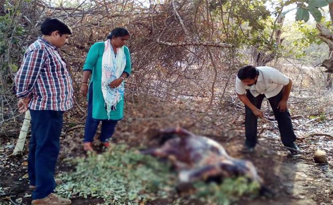 Gun Fire on Bear in Prakasam - Sakshi