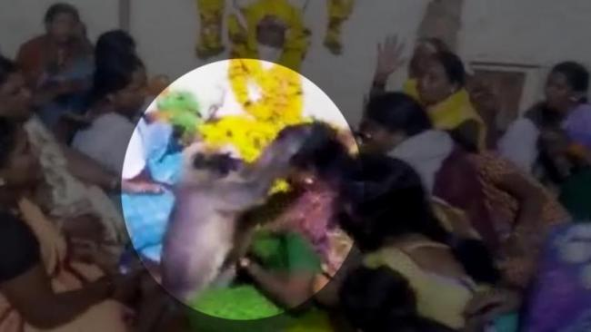 Monkey Consoles Woman At Karnataka Funeral - Sakshi