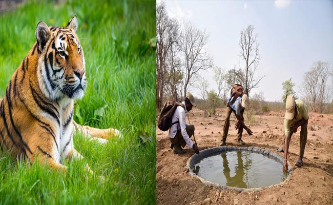 Forest Animals Problem With Water Mahabubnagar - Sakshi