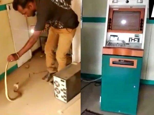 Snake Found Inside Tamil Nadu ATM - Sakshi