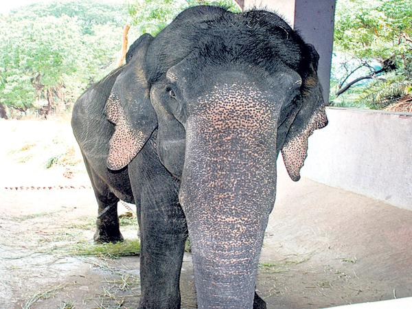 Forest Department decision to follow the High Court judgment On Elephant - Sakshi