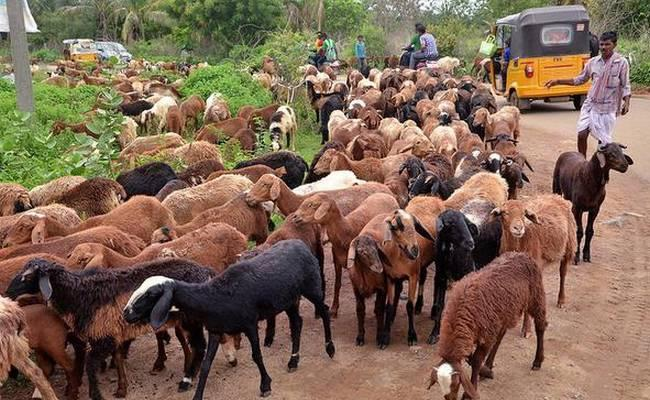 Animal Wealth Is Increased Warangal - Sakshi