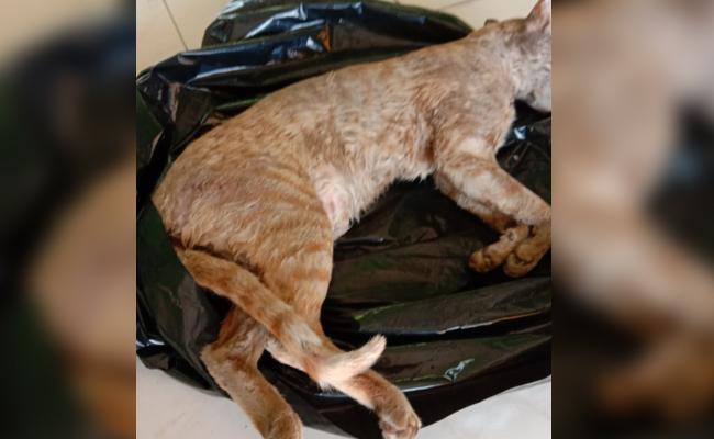 Case Filed on Cat Suspicious Death Visakhapatnam - Sakshi