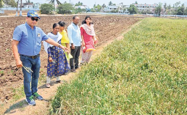 Special Story Of Small Grains Cultivation Techniques - Sakshi