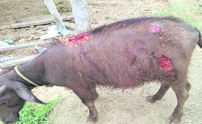 Dogs Attack On Villagers - Sakshi