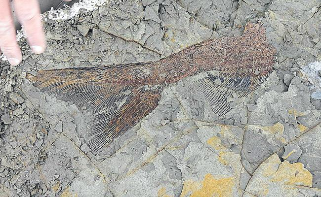 Fossils Discovered from the Day the Dinosaurs Died 66 Million Years ago - Sakshi