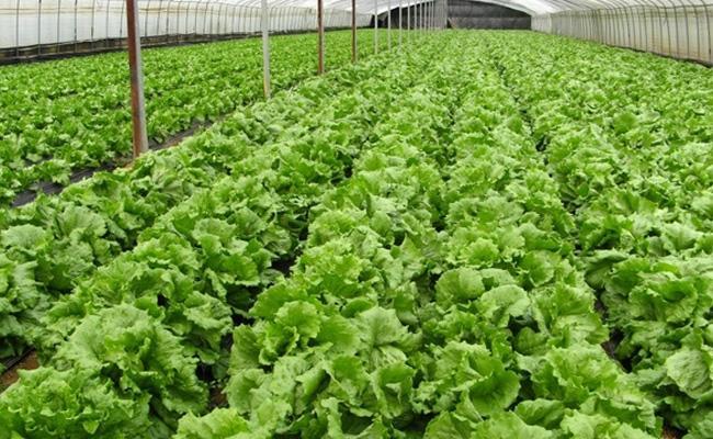 Article On Organic Farming In Sakshi