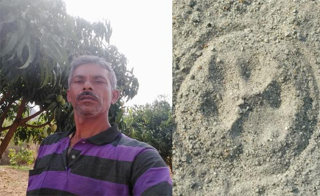 Leopard in Chittoor Crops - Sakshi