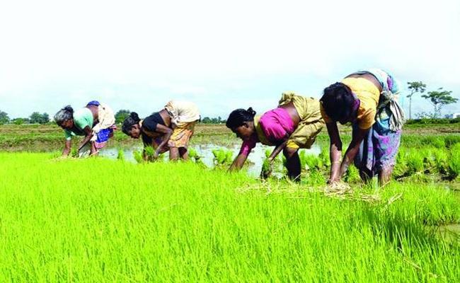 Farmers Kharif Crops Planning In Khammam - Sakshi
