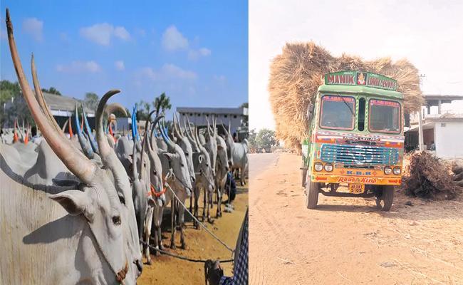 Cattle Fodder Shortage Medak Farmers - Sakshi