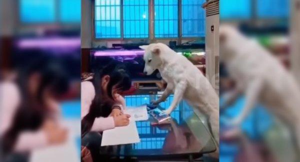 China Dad Trains Dog To Make Sure Daughter Does Homework - Sakshi