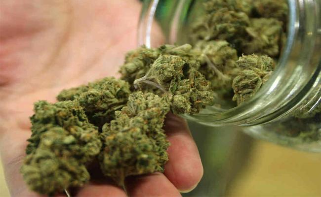 Marijuana Smuggling in Prison - Sakshi