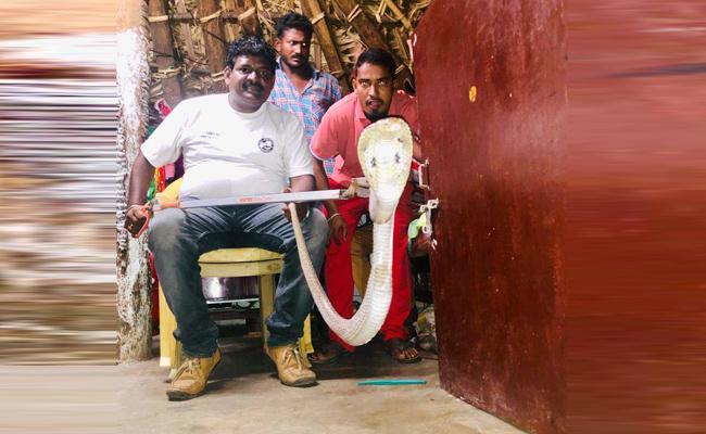 Python Snake in Visakhapatnam SVK Nagar - Sakshi