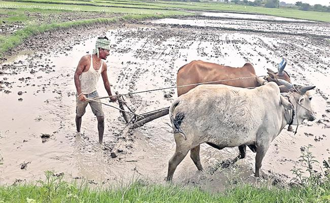All Telangana Schemes Are Not Apply Farmers - Sakshi