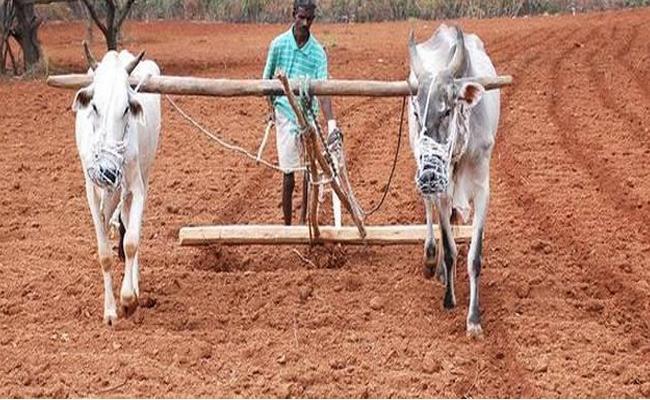 Kharif Crop Season All Arrangements Complete - Sakshi
