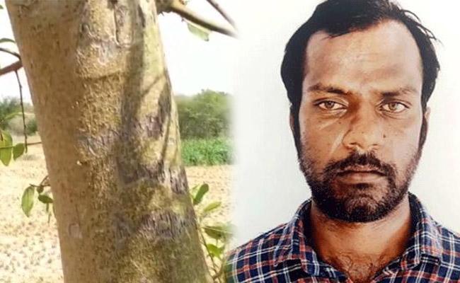 Murdered Girl Name on Hajipura Tree - Sakshi