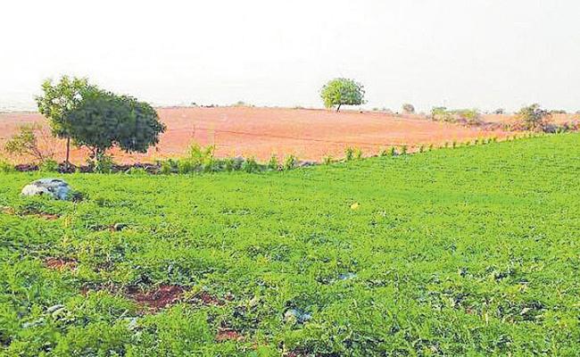 Temples Land Are In Kabza Across Telangana - Sakshi