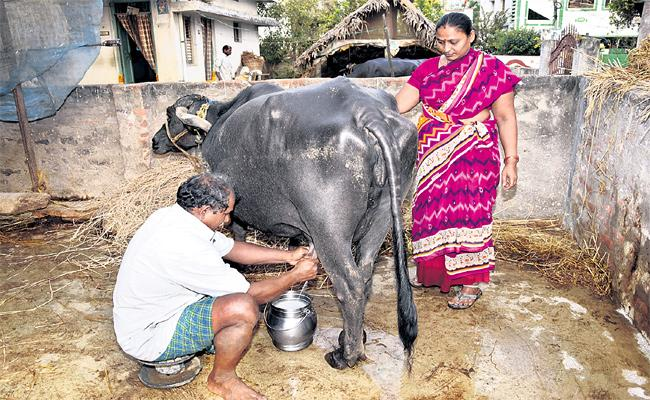 Dairy Farmers Happy With Milk Business - Sakshi