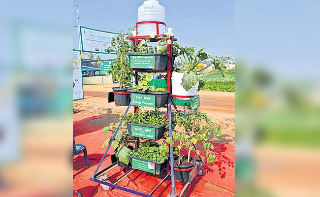 Vertical Garden in Small Place - Sakshi