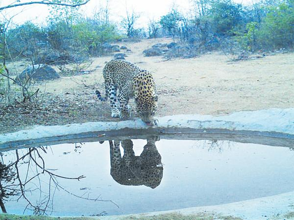 Forest department providing water to animals - Sakshi