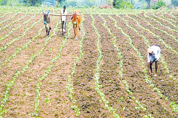 Seed marchants selling label less seeds to the farmers - Sakshi