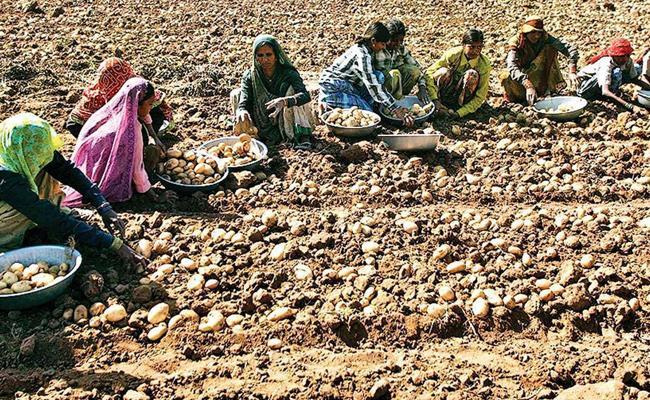 Narasimha Reddy Article On Case Filed On Farmers In Gujarat - Sakshi