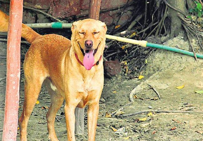 Man Beats Dog To Death After It Bites His Wife In Delhi - Sakshi