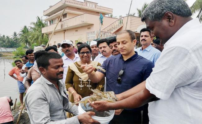Collector Praveen Kumar Visit Aqua Farms in West Godavari - Sakshi