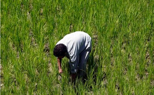 49 farm families who committed suicide have been relieved - Sakshi