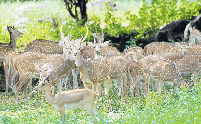 Forest Department has initiated Drinking water to Animals - Sakshi