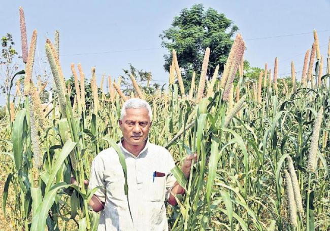 Nature crops are in ten crops - Sakshi