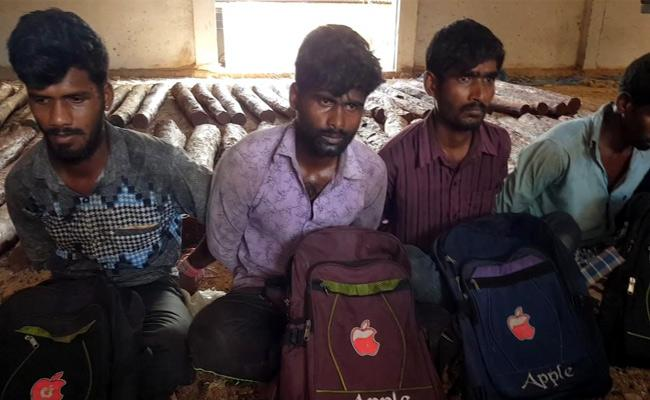 In Kadapa District Forest Police Caught Red Sandalwood Smugglers - Sakshi