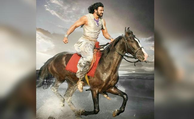 Bahubali Prabhas Horse Win Competitions - Sakshi