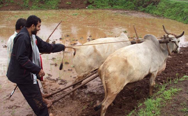 Preparing For Kharif Season Medak - Sakshi