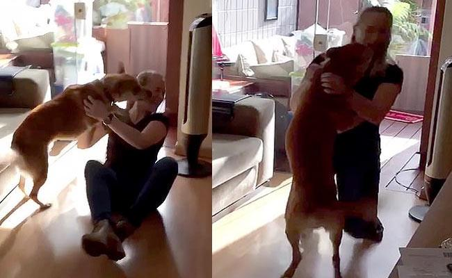Dog Gets Over Excited When See Friend In Brazil - Sakshi