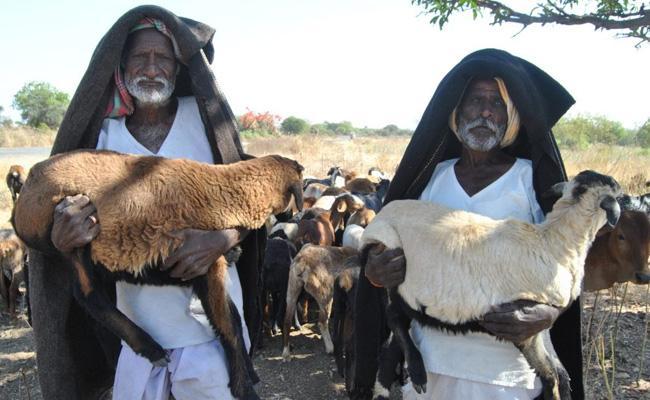 Telangana Sheeps Second Schedule Pending - Sakshi