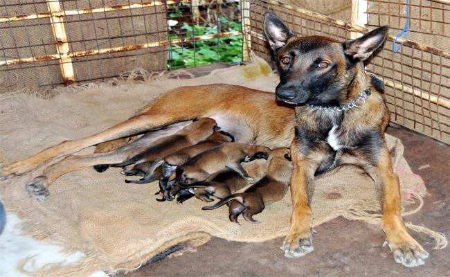 special dog - Sakshi