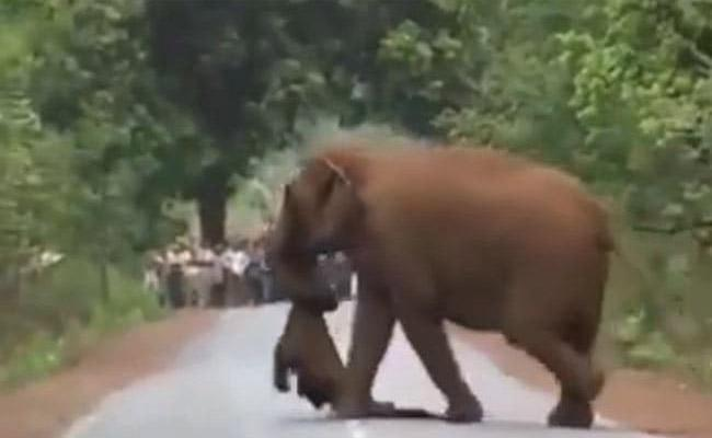 Elephant Herd Takes Out Funeral Procession For Dead Calf - Sakshi